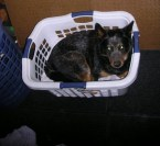 IKEA laundry basket/dog bed.
