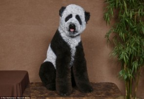 no, really, it\'s a panda