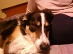 My Doggie