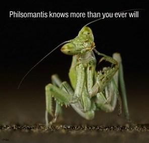 Philsomantis