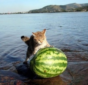 A Cat Rolling A Watermelon Out Of The Sea