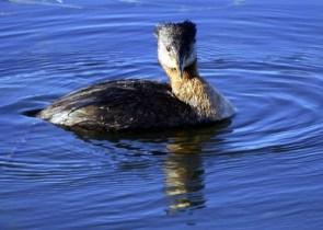 Anchorage Wildlife
