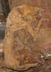 Mummified possum
