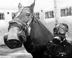 Horse Gas Masks