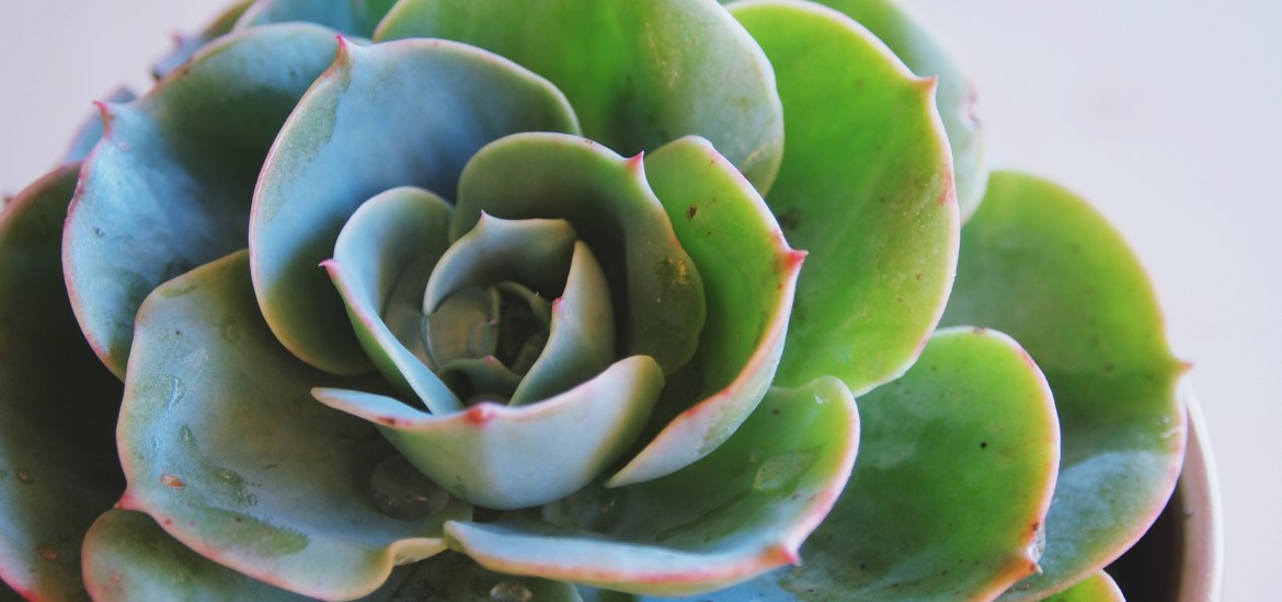Eight tips you need to know about succulents