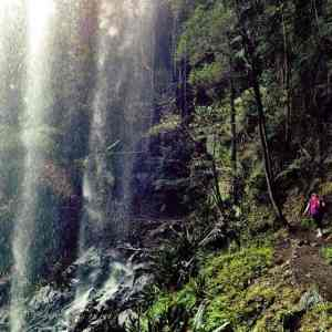 Springbrook National Park had some of my favourite hikes nearhellip