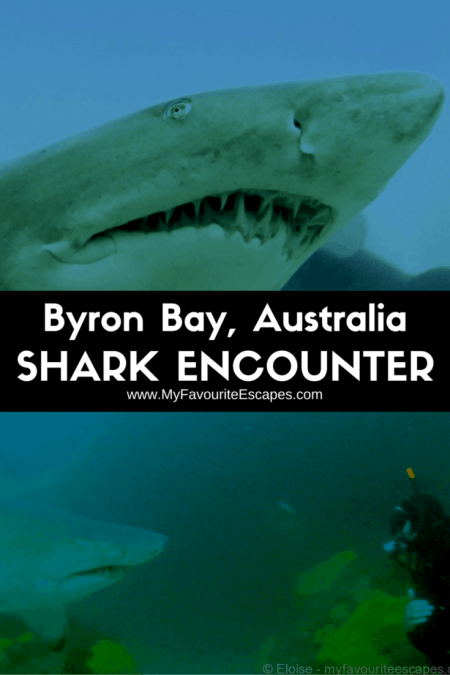 byron bay australia dive grey nurse sharks