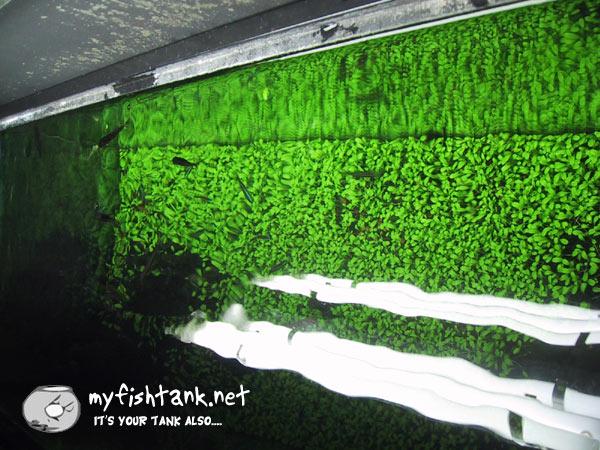 aquarium decorations ideas aquarium freshwater fish tank design Car