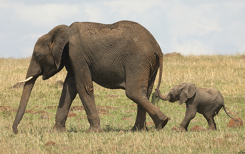 Elephant Tails & Bobby Pins