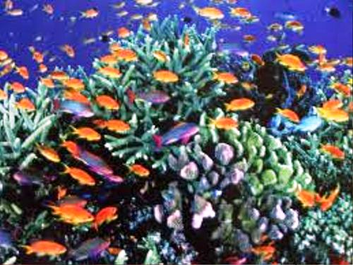 Tropical Ocean 3d Live Wallpaper 10 Interesting Great Barrier Reef Facts My Interesting Facts