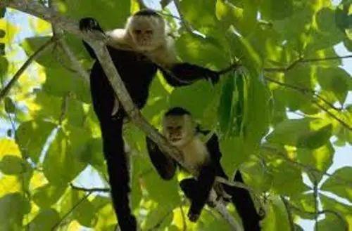Tropical rainforest monkeys galleryhip com the hippest