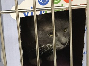 caged cat in shelter