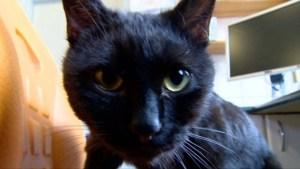 Radamenes nurse kitty