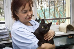 Vet with Radamenes the nurse kitty