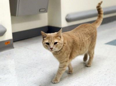 cat at VA hospital