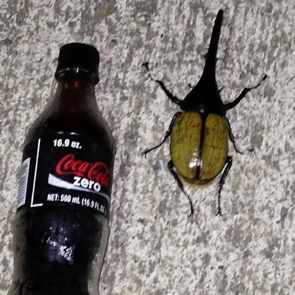 11. Bugs