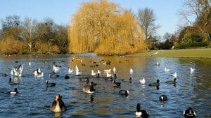 Regent's Park, uno dei parchi più belli di Londra