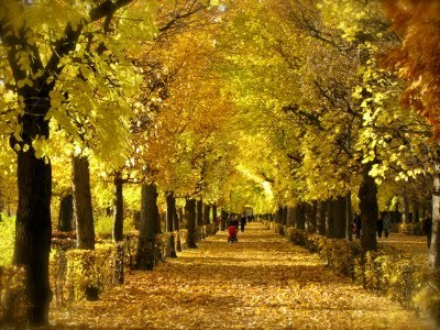 Fall Leaves Road Wallpaper Curb Appeal Driveways And Entrances