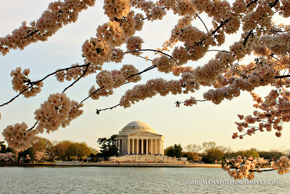Cherry Blossoms and Tidal Basin