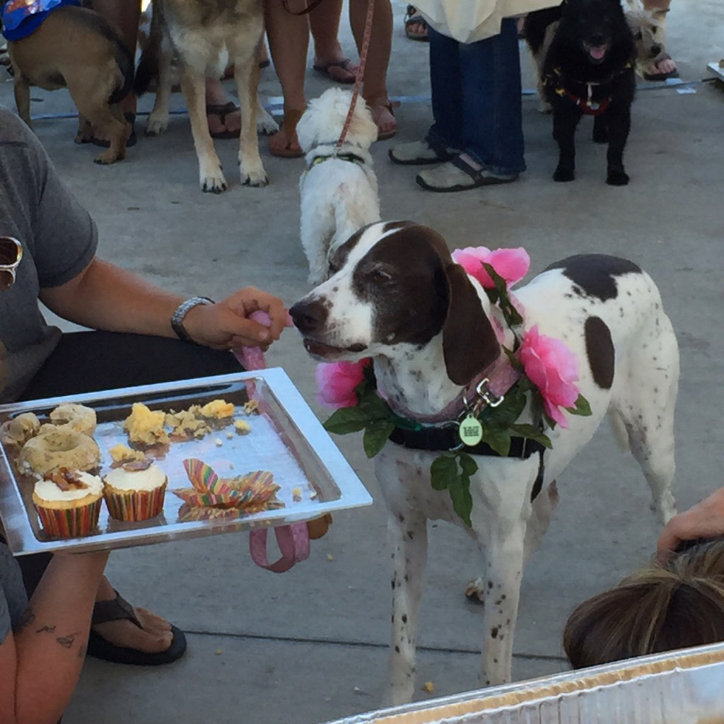 """You know you want to give me that dog-friendly cupcake topped with bacon."" This dog goes for the gold during the ""best begging face"" contest at the Walk for Old Dogs. (Photo credit: Dawn Browne)"