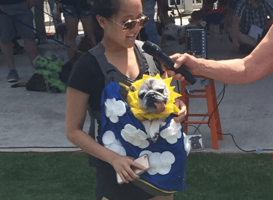Best part of summer: Old Dog Haven's adorable walk, pageant for senior dogs