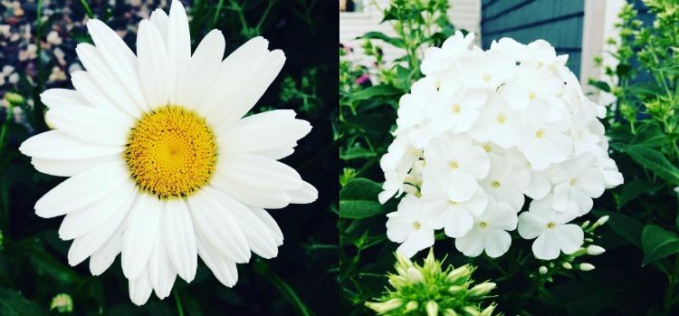 Weekend Snaps | Flower Power via MyOtherMoreExcitingSelf.com #daisy