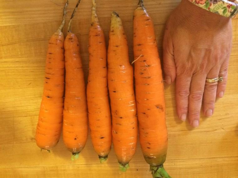 Carrots via MyOtherMoreExcitingSelf.com #gardening #gardenchat