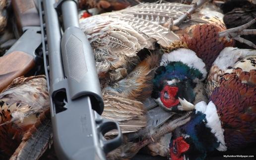 Hunting Iphone Wallpaper Pheasant Hunting Desktop Wallpapers 51