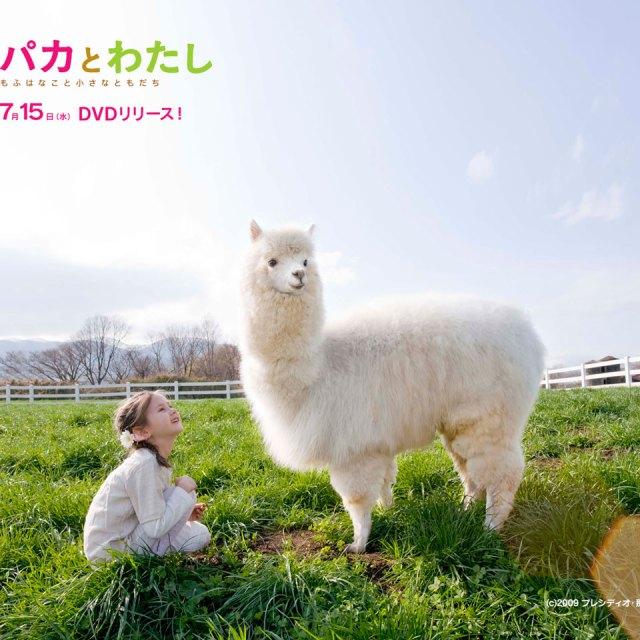 alpaca-desktopA-M
