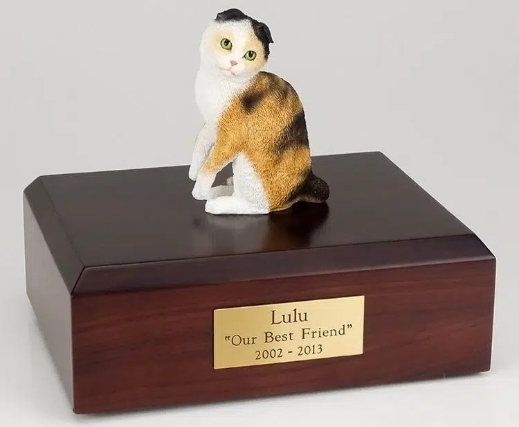 Scottish Fold Cat Cremation Figurine Urn W Wooden Storage Box