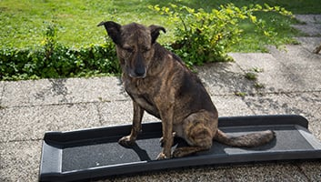 Best Dog Ramps For Your Pooch Reviewed Tested In 2019