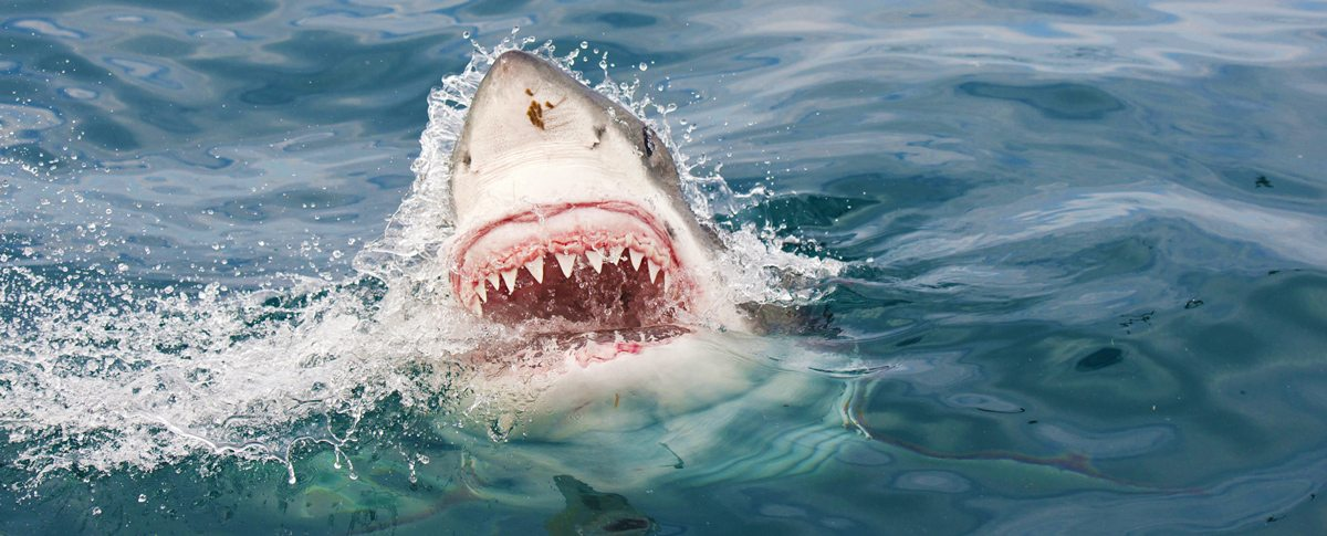Myrtle Beach Shark Attacks Should You be Worried or Not?