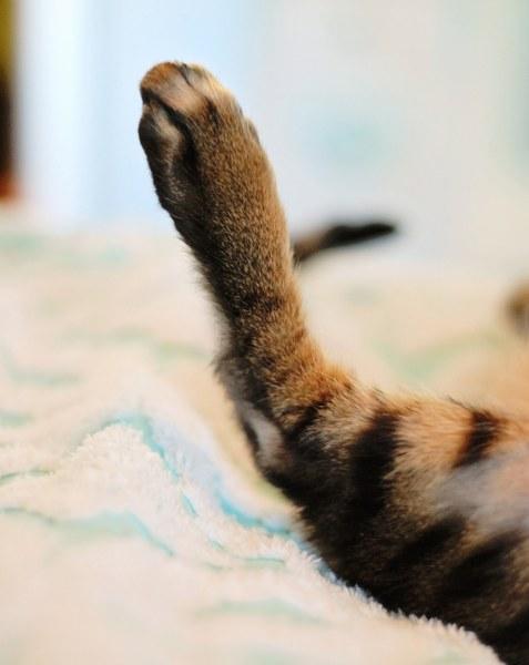 kitty foot