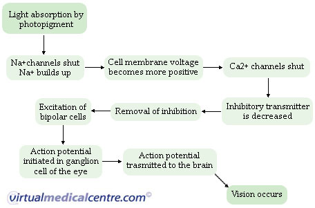 Human eye anatomy and how vision works information myVMC
