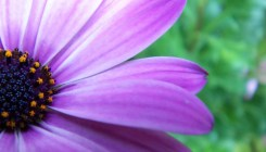 purple-flower-1384620-1600x1200
