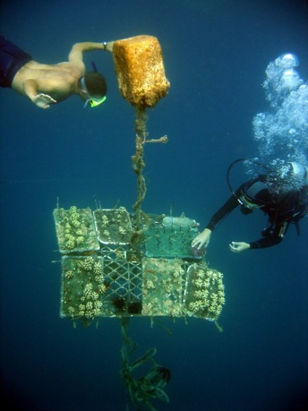 Floating coral nursery in Gulf of Eilat