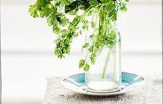 Coriander-Green-Food-Photography-Naina-Thumb