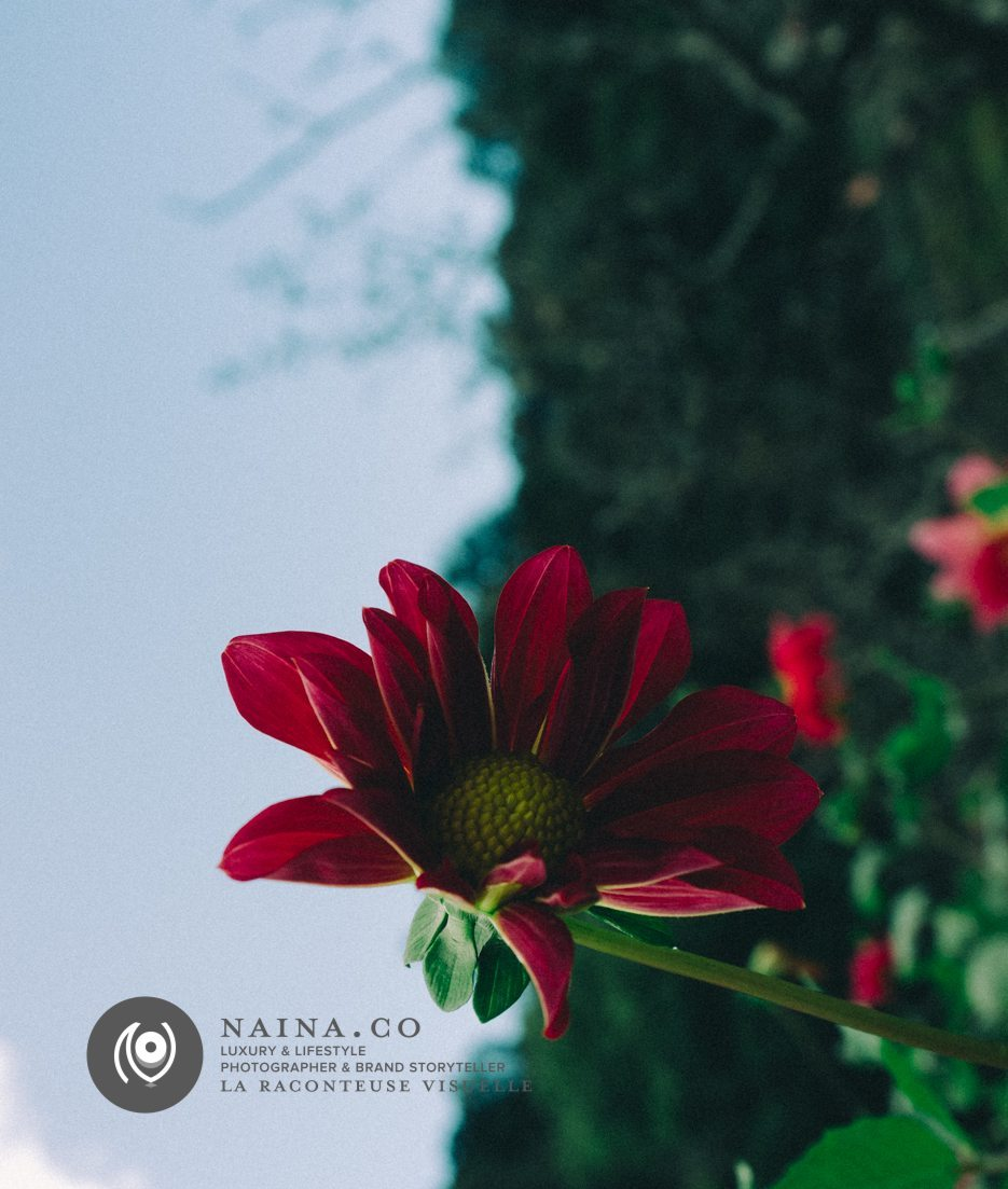 Naina.co-Photographer-Raconteuse-Storyteller-Luxury-Lifestyle-October-2014-VSCO-Film-06-Lightroom-01
