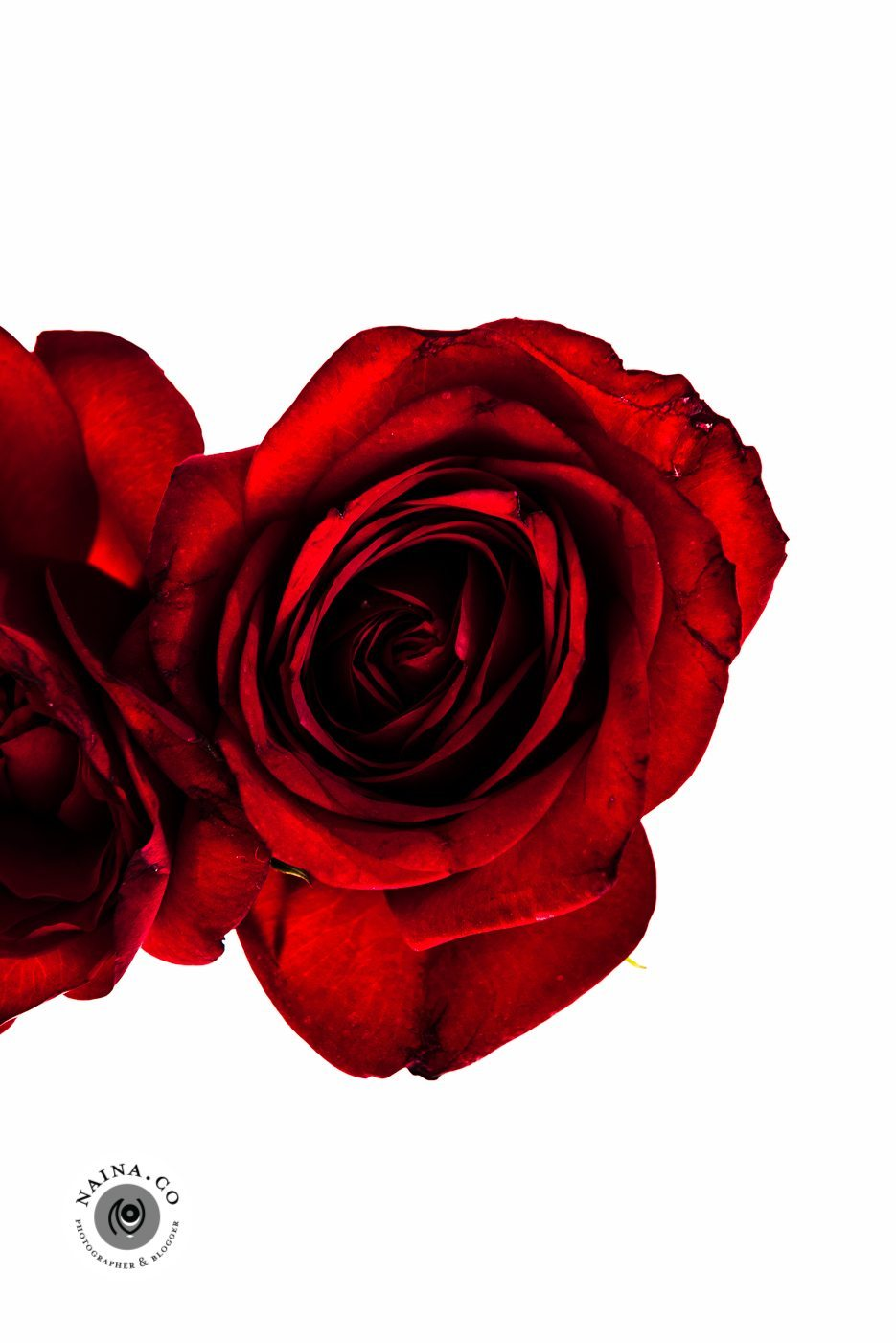 Naina.co-Raconteuse-Visuelle-Photographer-Blogger-Storyteller-Luxury-Lifestyle-March-2015-Roses-Art-Prints