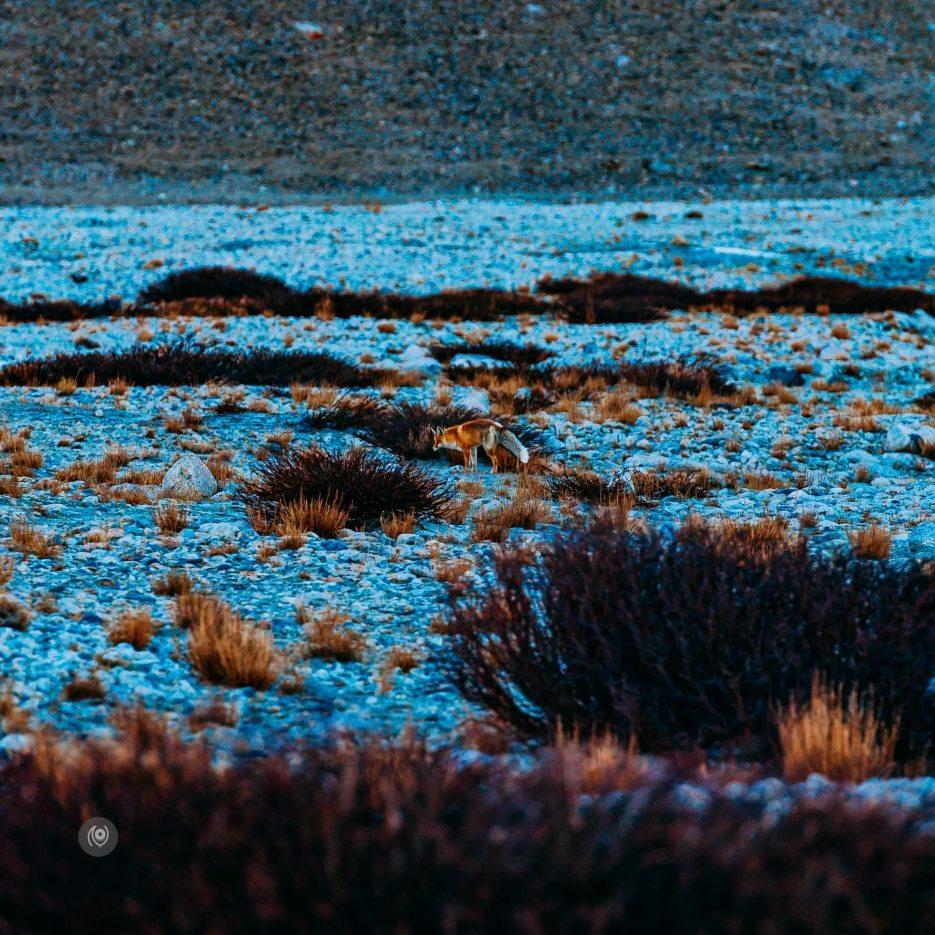 Naina.co-Ladakh-Mountains-Landscape-TheFox-Photographer-Photography-EyesforDestinations