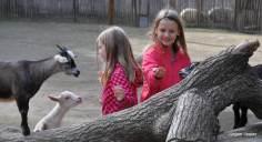 Ziegen und Kinder