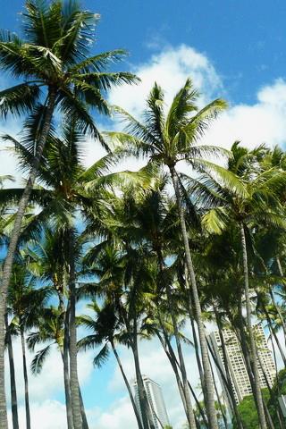Pictures For Wallpaper Iphone Iphone用ハワイの壁紙無料ダウロード:ハワイのライフスタイルブランド Nalu Hawaiian Spirit