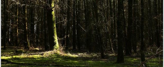 Het zonovergoten bos van de Stippelberg