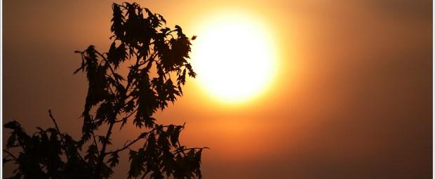 Met de zon in beeld, en een telelens, zijn mooie silhouetten te maken