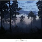 Twilight (1D132404)