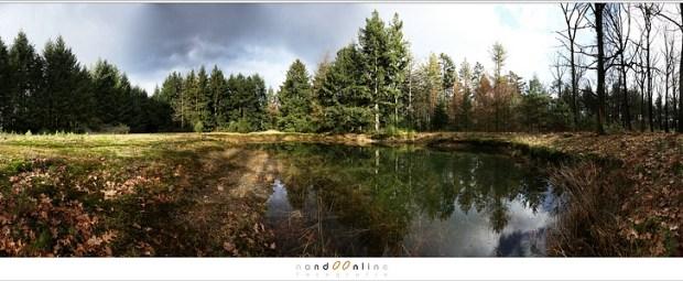 360° panorama op een open plek in het bos