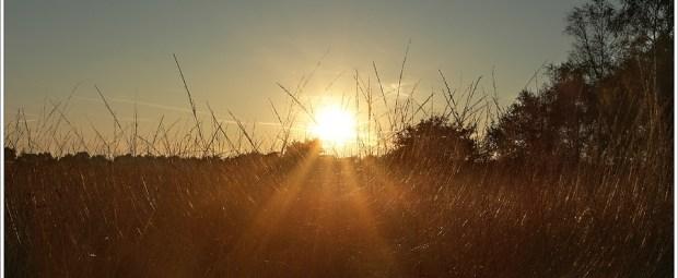 Sun and grass (1D071399)