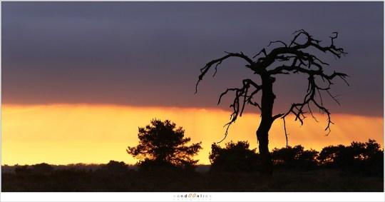 The Old Dead Tree - vijf jaar later