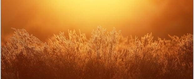 Gouden ochtendlicht (5D323435)