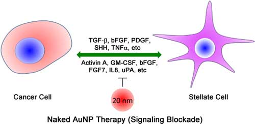 gold nanoparticles inhibit proliferation and migration of both PCCs and PSCs